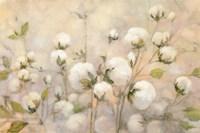 Cotton Field Fine Art Print