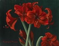 Crimson Beauties Fine Art Print