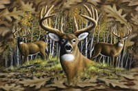 Whitetail Country Fine Art Print