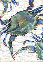 Beautiful Blue Swimmer Fine Art Print