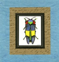 Bugs I Fine Art Print