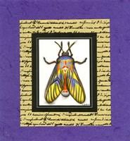 Bugs III Fine Art Print