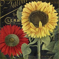 October Sun II Fine Art Print