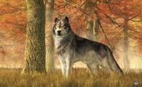 A Wolf In Autumn Fine Art Print