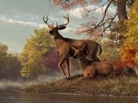 Deer On An Autumn Lakeshore Fine Art Print
