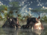 Hippos Coming To Get You Fine Art Print
