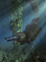 Platypus Fine Art Print