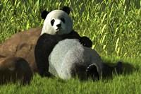 Reclining Panda Fine Art Print