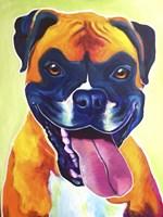 Boxer - Bear Fine Art Print