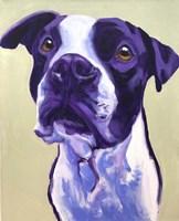 Pit Bull - David Fine Art Print