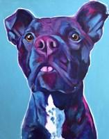Pit Bull - Neko Fine Art Print