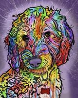 Sweet Poodle Framed Print