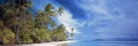 Palms Fine Art Print