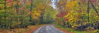 Autumn Road Fine Art Print