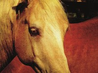 Palomino and Chestnut Fine Art Print