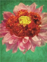 Dahlia Party II Fine Art Print
