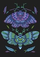 Animals Lovers - Butterflies Fine Art Print