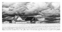 Five White Barns Fine Art Print