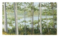 Birch Lake Fine Art Print