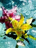 Floating Lilies 1 Fine Art Print