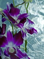 Floating Orchid Fine Art Print