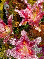 Stargazer Lilies 6 Fine Art Print