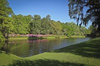 Middleton Place 1, SC Fine Art Print