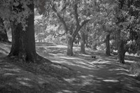 Middleton Place 3 B&W, SC Fine Art Print