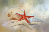 Gifts From The Sea Fine Art Print