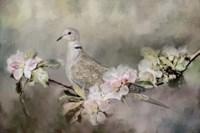 Eurasian Dove In The Garden Fine Art Print