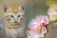 Sweetness In A Small Package Fine Art Print