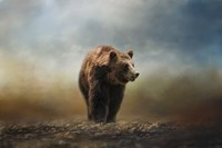 Grizzly On The Rocks Fine Art Print