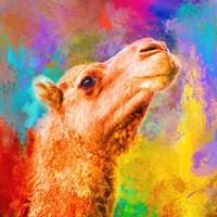 Jazzy Camel Fine Art Print