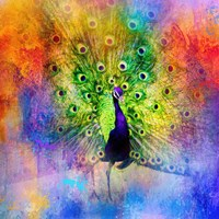 Jazzy Peacock Fine Art Print