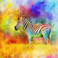 Jazzy Zebra Fine Art Print