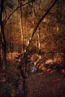 Shiloh Creek 2 Fine Art Print