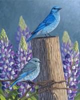 Mountain Blues Lupines Fine Art Print