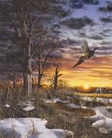 Autumn Ringneck Fine Art Print