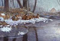 Creekside Fine Art Print
