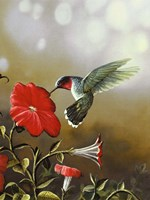 Ruby Throated Hummingbird Fine Art Print
