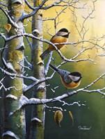 Winter Refuge Chickadees Fine Art Print