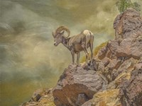 Browns Bighorn Fine Art Print