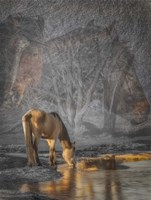 Spirits of Cold Creek Fine Art Print