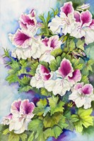 Regal Geranium Fine Art Print