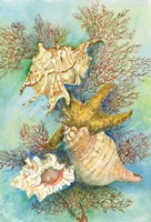 Shells in the Deep Green Sea Fine Art Print