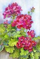Bold Blue Sky Bright Geraniums Fine Art Print