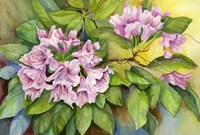 Pink Sunlit Azalea Fine Art Print