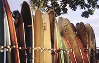 Long Boards Waikiki Fine Art Print