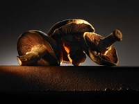 Mushroom On Ledge Fine Art Print