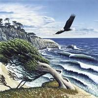 Eagle Cove Fine Art Print